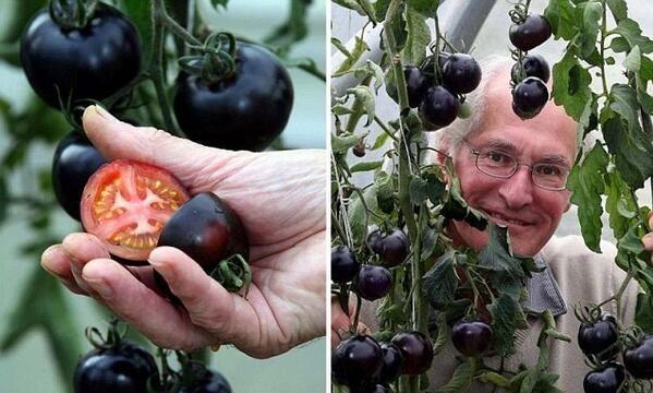 2017 sztárja lehet a fekete paradicsom - Egy az Egyben