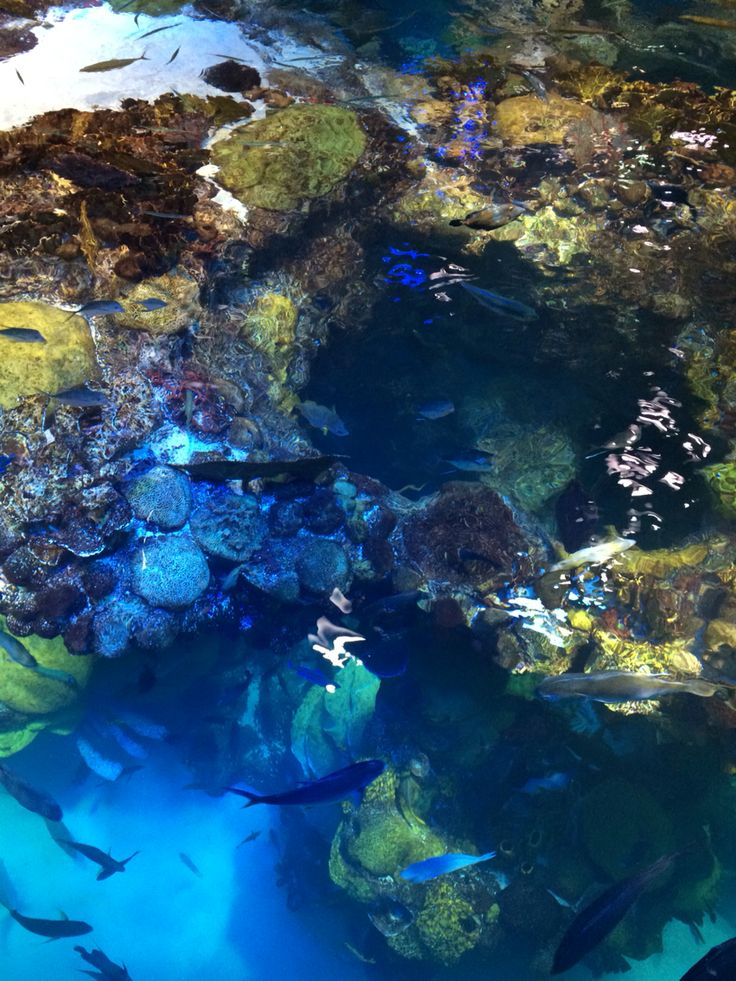 New england aquarium boston ma photographs pinterest New england aquarium tickets