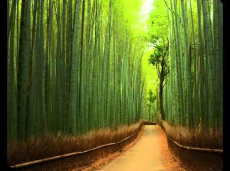 EL Bambú de la Suerte                          La energía positiva de la Vida El BAMBÚ de la suerte es una de las curas más populares…estimula el flujo de la energía positiva de la fuerza de la vida. De lento desarrollo, todo su crecimiento es subterráneo…así de espectacular como la nueva creación de Anaco, la colección BAMBÚ. https://goo.gl/AL7Wh8