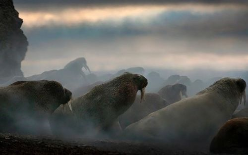 In Call Of The Wild @markedwardharrisphoto interviews @michellevalbergphotography on her experiences photographing the rare wildlife and beautiful landscapes of the Canadian Arctic. Pick up a copy of the January/February 2018 issue!    #OPJanFeb #wildlife #landscape_lovers #sky_captures #landscapephotography #fantastic_earth #landscape_captures #ic_landscapes #ig_exquisite #ourplanetdaily #landscapelovers #instanaturelover #welivetoexplore #allnatureshots #specialshots #landscapestyles…