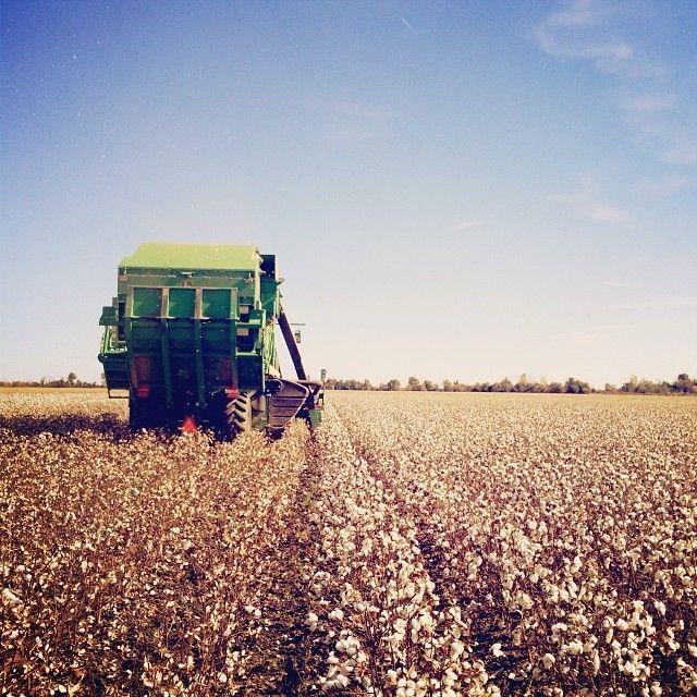 #Cotton harvest underway in the Missouri Bootheel. #Americasfarmers