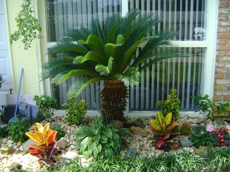 The 25+ best Palm trees landscaping ideas on Pinterest on Palm Tree Backyard Ideas id=68909