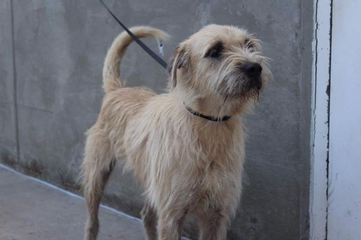 11/21/16-ODESSA,TX- Bryant is a male Terrier 2-3 years old Kennel (ask the staff to meet him) $51 to adopt ADOPT/RESCUE/FOSTER Located at Odessa, Texas Animal Control. Must have a valid Drivers License and utility bill with matching address to adopt. They accept Credit Cards, cash or checks. We ARE NOT the pound. We are volunteers who network these animals to try and find them homes. Please send us a PM if we can answer any questions for you.