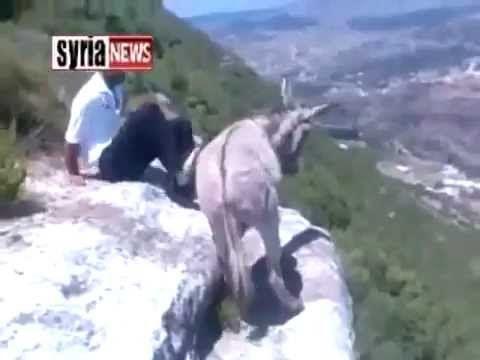 muslims fucking a donkey