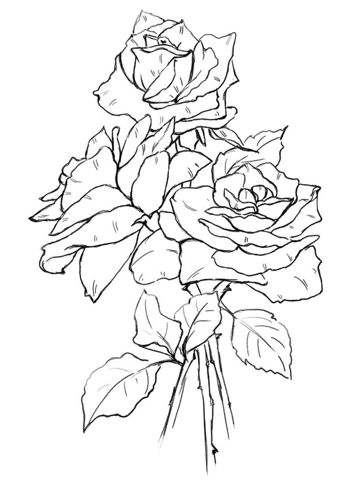 rose art coloring pages - photo#5
