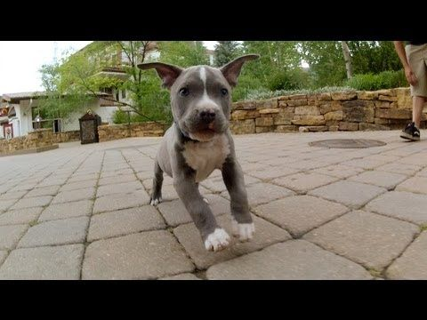 GoPro HD: Dogs of the Teva Mountain Games 2012. I want the cute gray puppy that comes up first!!