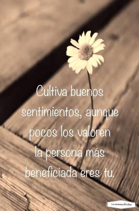 #cultiva buenos sentimientos