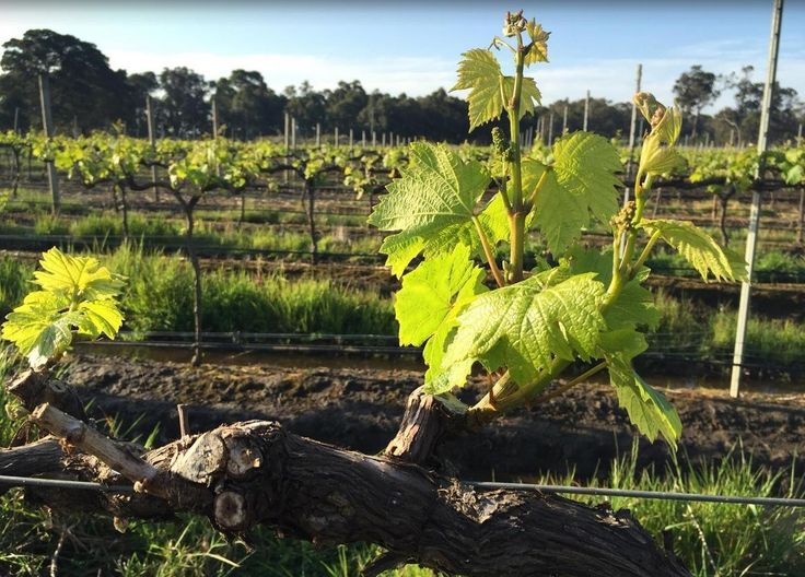 The Margaret River wine region is home to approx 140 wineries.