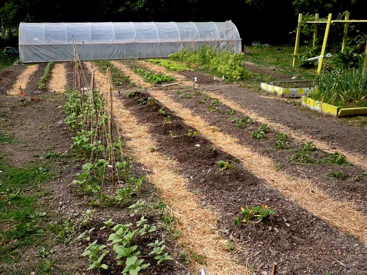 17 best images about hoophouses greenhouses on pinterest horticulture cleveland and for Eastside urban farm and garden