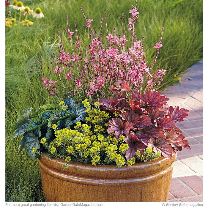 Perennials Are Perfect In Pots. Gardening TipsContainer ...