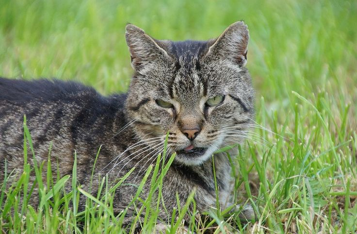 Free Jigsaw Puzzles Online - CAT  #Game #JigsawPuzzle #Puzzle