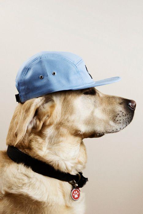 Dog style!                                                                                                                                                                                 Mais