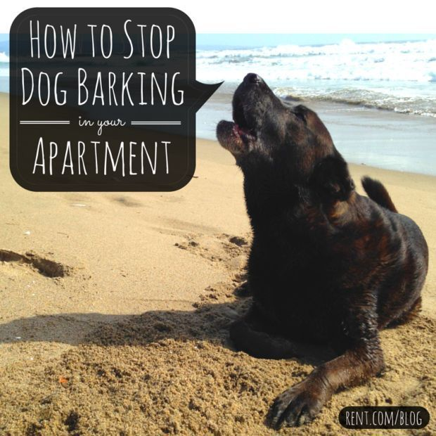 Dogs bark for a number of reasons, but it can get frustrating when you're not there to calm your dog down. If your dog is making your neighbors hate you by barking too much in your apartment, check out these tips to stop your dog from barking in your apartment.