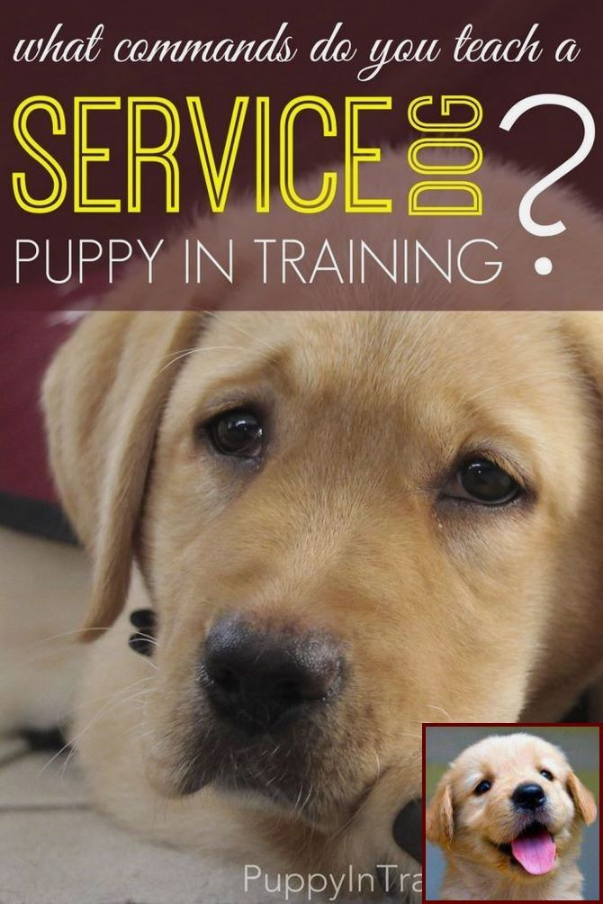 House Training Your Puppy Without Crate And Dog Training Classes