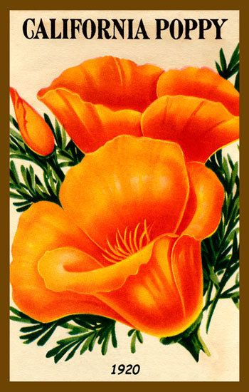 90 best california poppies images on pinterest poppies california california poppy quilt block from a set of california poppies with a free pattern to make a quilted wall hanging mightylinksfo