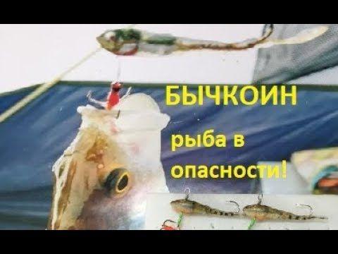 Бычкоин - наша новая приманка! - YouTube