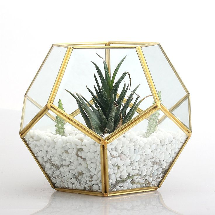 Image result for gold geometric succulent geometric