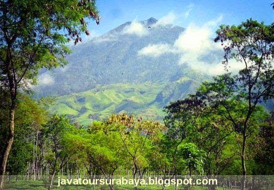PAKET WISATA INDONESIA | TOUR WISATA MURAH | JELAJAH NUSANTARA | TRAVEL SENTOSA EXPRESS: JELAJAH MALANG BUNGA  http://www.javatoursurabaya.blogspot.com/2014/07/malang-asri.html