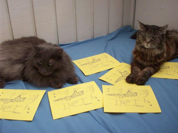 Den stora färgen bland disktrasorna är gult. Här med båda killarna från www.katt4you.se