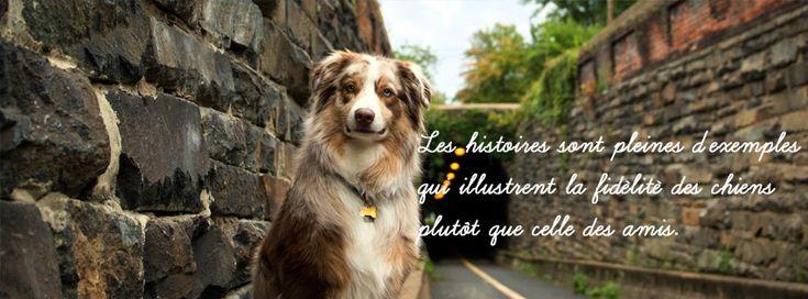Les histoires sont pleines d'exemples qui illustrent la fidélité des chiens plutôt que celle des amis.
