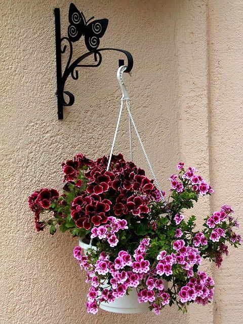 Pravilna sadnja cveća u viseće saksije