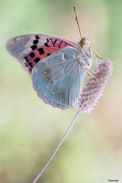 pretty butterfly..