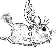 chinchilla drawing google search