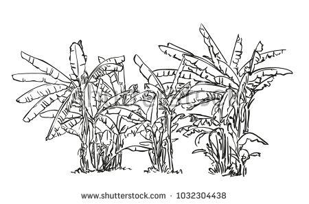 Sketch of banana tree plantation, Hand drawn vector illustration
