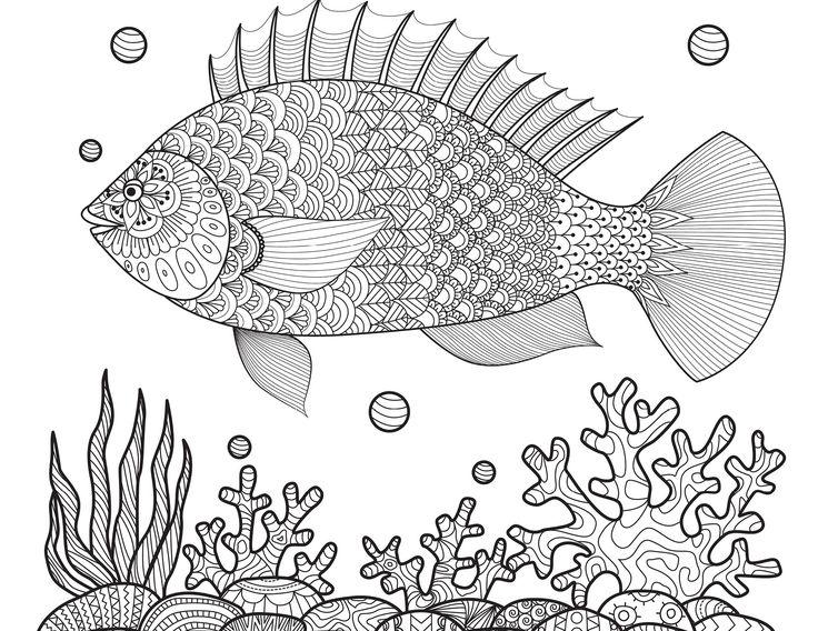Großzügig Fisch Farbseiten Ideen - Ideen färben - blsbooks.com