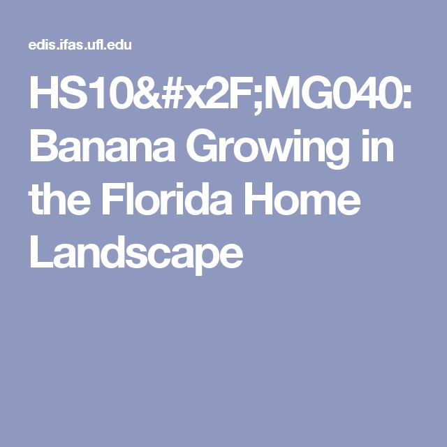 HS10/MG040: Banana Growing in the Florida Home Landscape