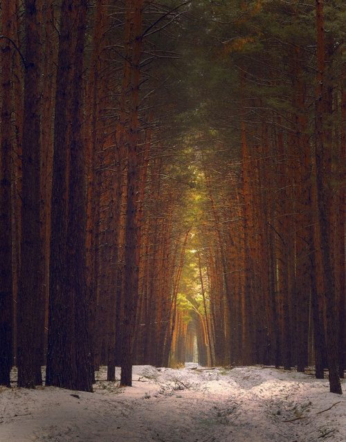 forest for the trees: Forests, Nature, Dream, Beautiful, Trees, Places, Landscape, Photography