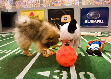 You can even tailgate at the Puppy Bowl.