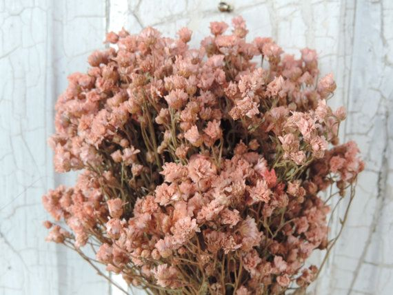 Dried Flowers Bouquet Blush Pink Bunch Achilea Of Pearl Flower Everlasting Dyed By Hand Star Fl Supply