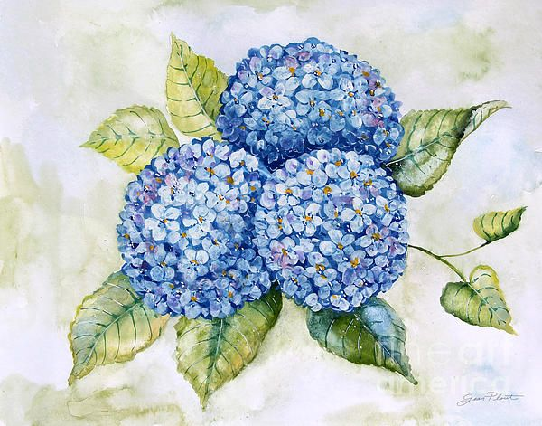 Check out this new painting that I uploaded to plout-gallery.pixels.com! http://plout-gallery.pixels.com/featured/hydrangeas-jp3879-jean-plout.html