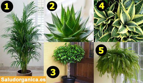 M s de 1000 ideas sobre plantas que purifican el aire en Plantas limpiadoras de aire