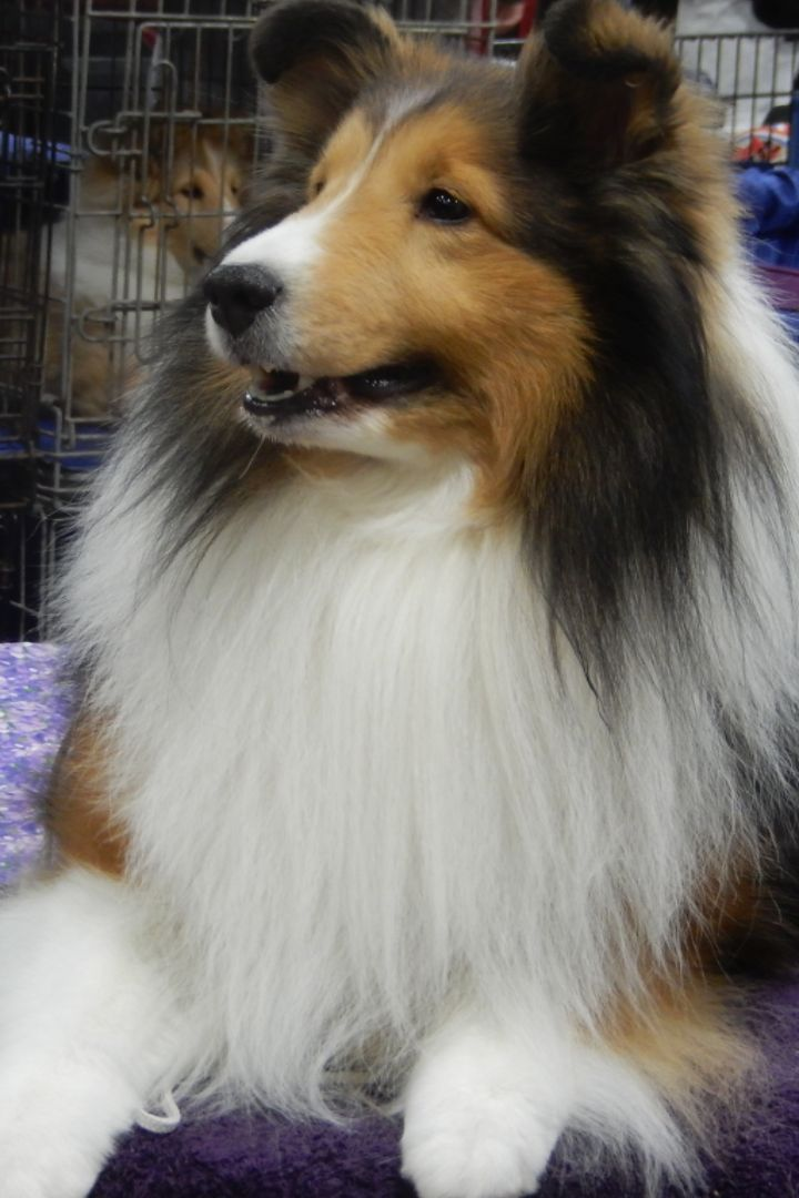 I Went to the National Dog Show, and This Is What I Saw Backstage