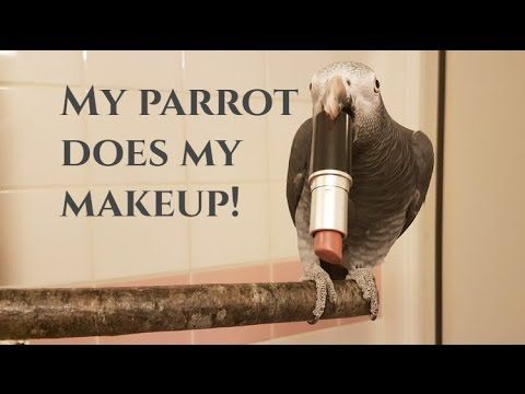 My parrot does my makeup! - YouTube