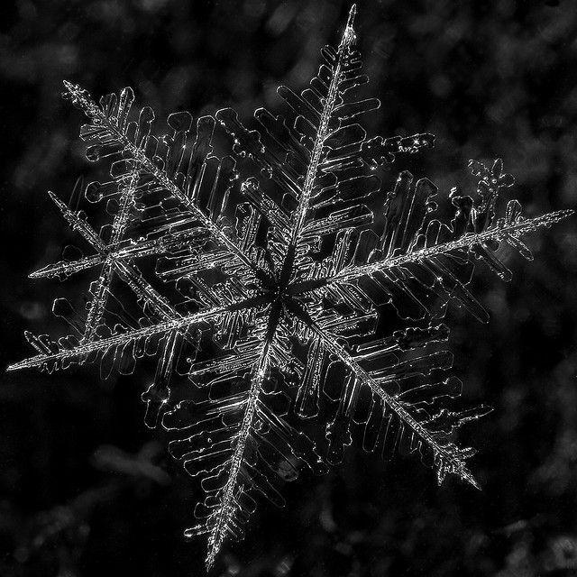 Beautiful macro snowflake!