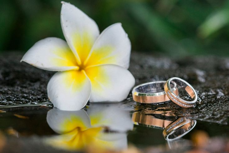 mariage thème frangipanier : photo des alliances