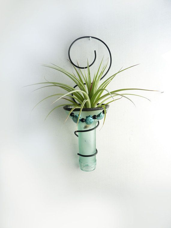 Air Plant Holder  Recycled Bottle Sconce  Pale Green With Aqua Shell Beads