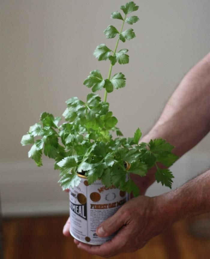 DIY: An Easy Way to Grow Celery from Its Root
