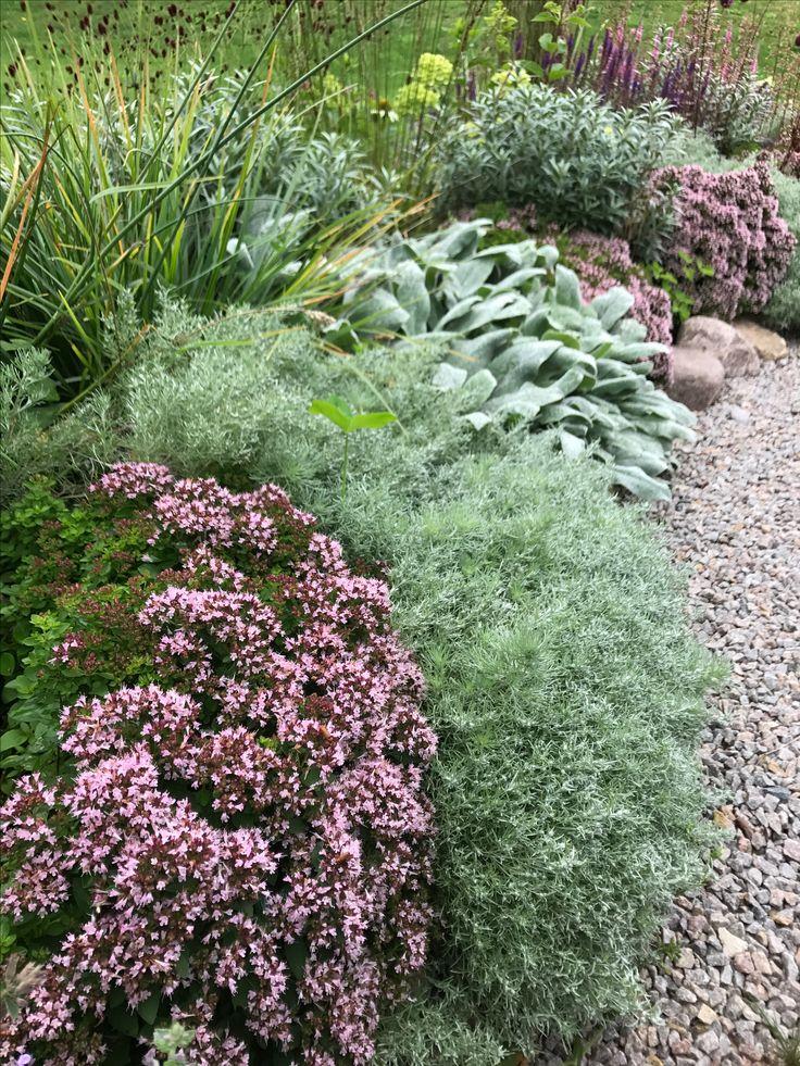 Härliga kantväxter i soligt läge Origanum vulgare 'Compactum', Artemisia schmidtiana 'Nana' och Stachys byzantina 'Silver carpet'.