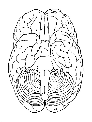 89 best Education Science Anatomy images on Pinterest The brain - new coloring pages blood blood consists of plasma and formed elements