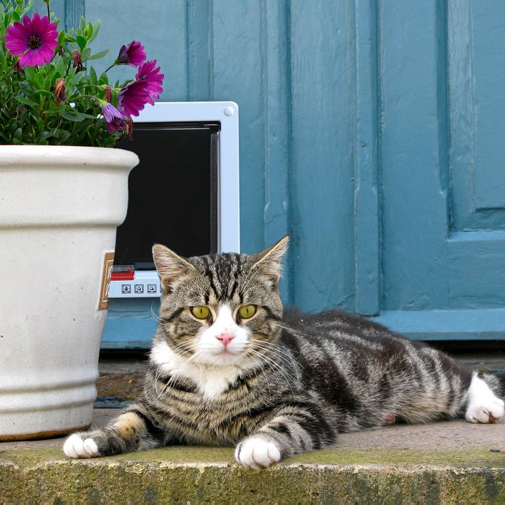 Our PetsN'all Four-way Locking Pet Door, gives your cat or small dog the freedom to come and go   Aspectek
