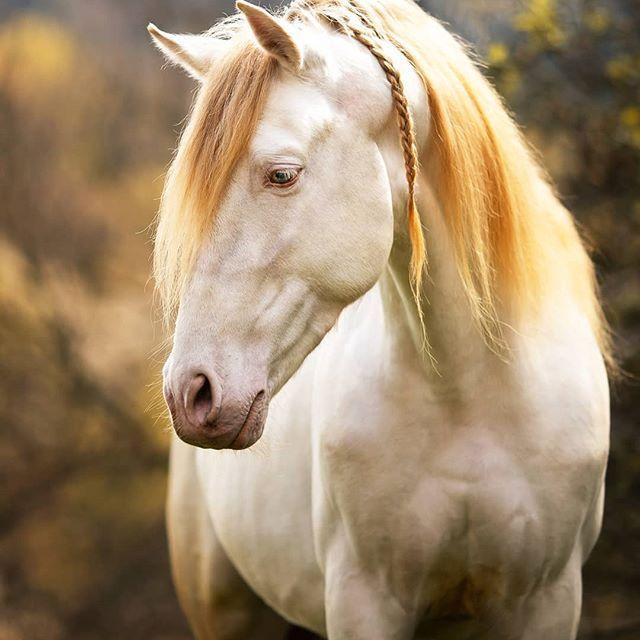 Anna Panke Photography On Instagram Elfenpferd Passender Konnte Leos Spitzname Nicht Sein Ode In 2020 Mustang Pferd Weisse Pferde Pferde Bilder