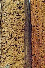 Istnieje wiele czynników zagrażających drewnu, które nie zostało odpowiednio zabezpieczone. W przypadku miejsc o zmiennej wilgotności i temperaturze otoczenia, musimy liczyć się z możliwością pęcznienia, kurczenia i pękania drewna na różnych głębokościach. http://drewnochron.pl/porady/konserwacja-drewna/rodzaje-zagrozen-i-sposoby-leczenia-drewna-2