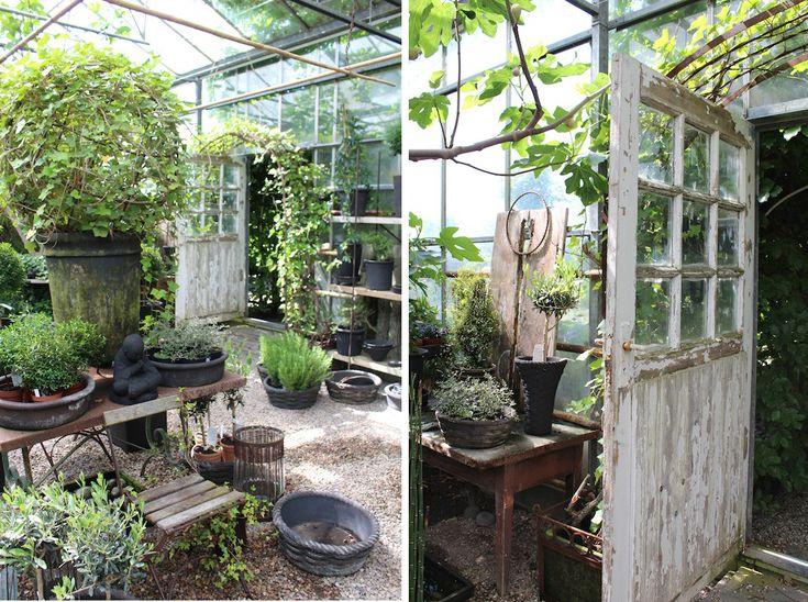 Löddeköpinge Plantskola 6