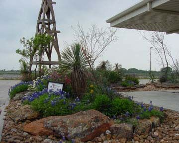 21 Best Images About Xeriscape Texas Hill Country On Pinterest