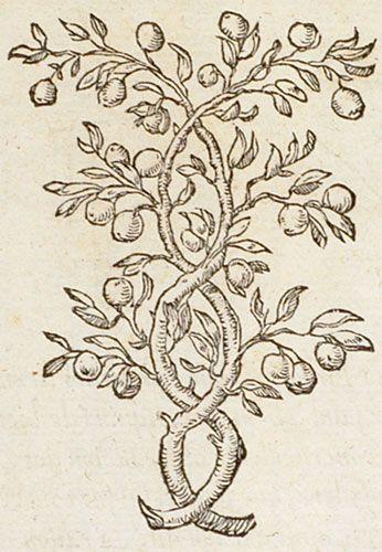 Pictura of Paradin, Claude: Devises heroïques (1557): Ab insomni non custodita Dracone.