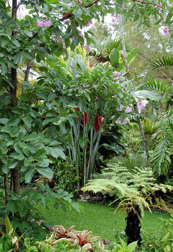 Heliconia perfection at Jesse Durko's Nursery
